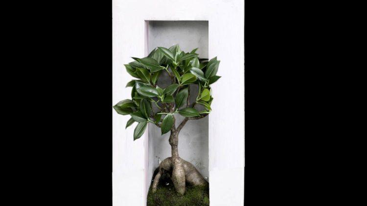 design cadre vegetal